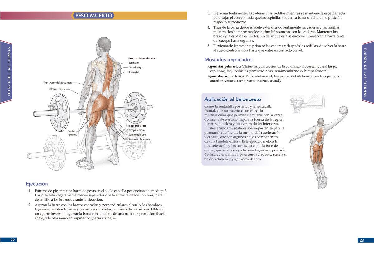Anatomía del jugador de baloncesto - BASKETSPIRIT.COM